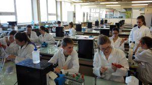 Bacteriologisch Practicum