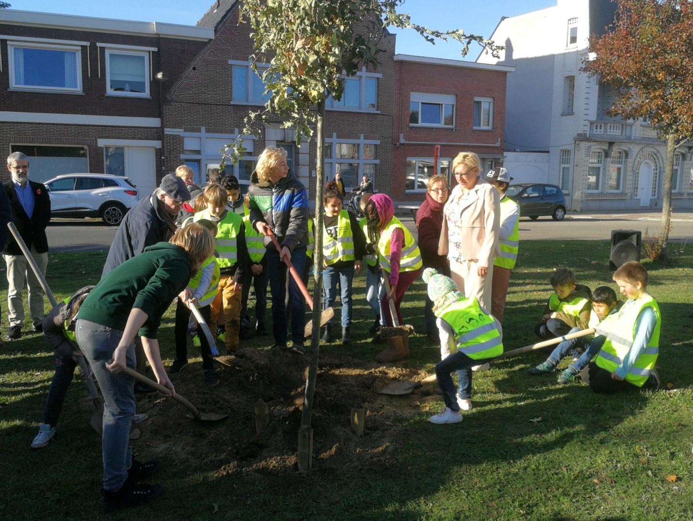 Planting vredesboom